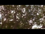 FILMITALIA.TV Santeria.The Soul.Possessed.2011.Subbed.iTALiAN.mp3.XviD.FLV